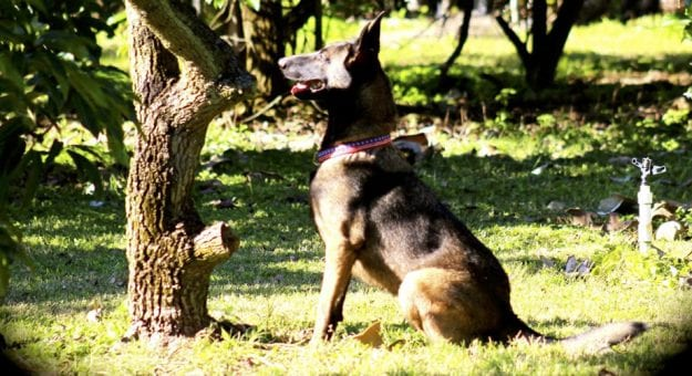 2021mar16 Covid Dogs